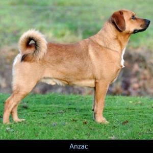 Anzac2