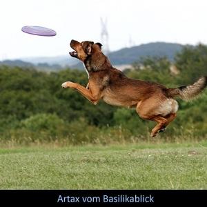 Artax2