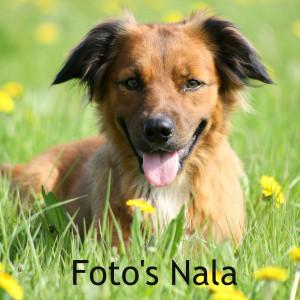 Foto's Nala